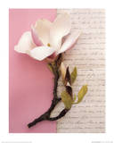Emma's Garden Magnolia Affiches par Deborah Schenck
