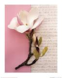 Emma's Garden Magnolia Prints by Deborah Schenck