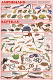 Amphibians and Reptiles Educational Science Chart Poster Print
