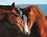 Horses (Tenderness) Art Poster Print Prints