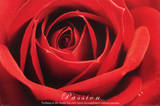 Red Rose (Passion) Art Poster Print Photo