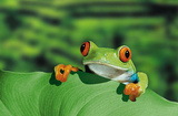 Red Eyed Tree Frog (Peeking Over Leaf) Art Poster Print Photo