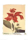 Red Hibiscus Posters by Deborah Schenck