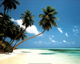 Maldives Morning (Tropical Beach) Art Print Poster Posters