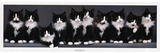 Keith Kimberlin (10 Norwegian Kittens) Art Poster Print Posters