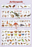 Arthropods Insects Educational Science Chart Poster Prints