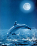 Moon Dolphin Art Print Poster Posters