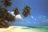 Maldive Morning (Palm Tree Beach) Art Poster Print Posters