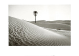 Palm Tree Mauritania Posters by Raymond Depardon