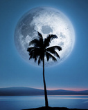Dreamland (Palm Tree & Moon) Art Poster Print Prints