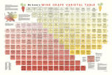 Wine Grape Varietal Table Art Poster Print Póster