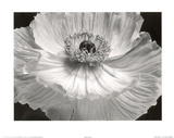 Poppy Flower (B&amp;W Close-Up) Art Poster Print Posters