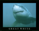 Great White Shark in Ocean Close Up Art Print POSTER Photo