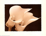 Sepia Two Lilies Art Print Poster Posters