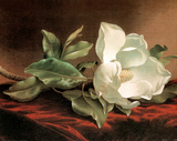 Martin Heade White Magnolia Grandiflora Art Print Poster Prints