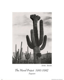 Ansel Adams (Saguaro Cactus) Art Print Poster Photo