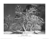 Ansel Adams Snow in Apple Orchard Yosemite California Art Print Poster Print