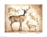 Whitetail Deer Studies sketches Art Print Poster Poster