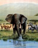 Alan Fairbrass African Safari Art Print Poster Prints