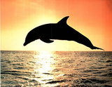 Dolphin Jumping At Sunset Art Print Poster Posters