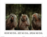 Monkeys Hear No Evil See No Evil Speak No Evil POSTER Posters