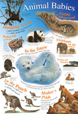 Laminated Animal Babies Educational Chart Poster Print Photo