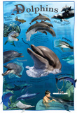 Dolphins Animals Educational Chart Poster (Laminated)