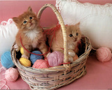Kittens (Yarn Basket) Photo Print Poster Posters