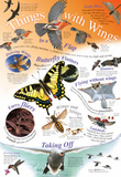 Laminated Things with Wings Bird Animal Educational Chart Poster Print Posters