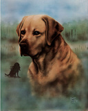 Carolyn Chaney Golden Retreiver Art Print Poster Láminas