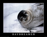 B. Todd (Daydreamer, Seal) Art Poster Print Prints