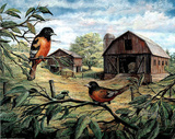 Orioles Birds on Tree Branch & Barns Art Print POSTER Photo