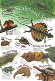 Laminated Scales and Tails Animal Educational Chart Poster Print Posters