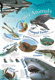 Laminated Underwater Animals Educational Chart Poster Print Poster