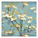 Dogwood I - Blossoming Tree Giclee Print by Amy Melious