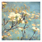 Dogwood II - Blossoming Tree Giclee Print by Amy Melious