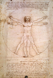 The Proportions of the Human Figure Autocollant mural par Leonardo DaVinci