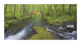 Nestucca River Panorama Limited Edition by Donald Paulson