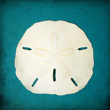 Sand Dollar II Prints by Diana Brennan