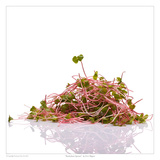 Buckwheat Sprouts Prints by David Wagner