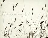 Grass Harmony Posters par Amy Melious
