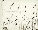 Grass Harmony Posters af Amy Melious