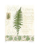 British Fern III Limited Edition by Paula Scaletta
