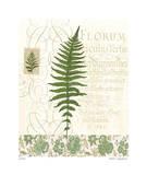 British Fern III Giclee Print by Paula Scaletta