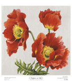 Poppies on Silk Posters by Judy Shelby