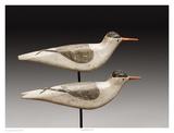 Long Island Terns Posters par Robert Shaw