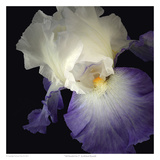 Tall Bearded Iris 9 Posters par Richard Reynolds