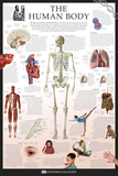 Cuerpo humano Láminas