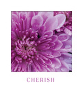 Cherish Poster by Erin Berzel