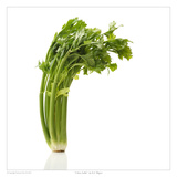 Celery Stalks Prints by David Wagner